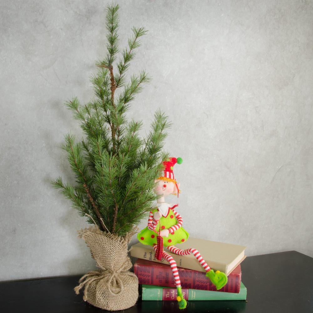 24 pine tree sapling burlap wrapped