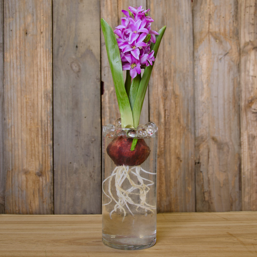 12 mini flowering faux hyacinth bulb lavender 262654 12 mini hyacinth bulb lavender reviewsmspy